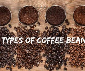 Coffee Bean Variety – Top 6 Coffee Bean Variety Known and UnKnown